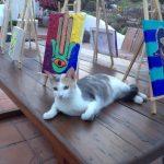 Cats and Hamsas