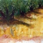 Spanish Landscape Olive Trees