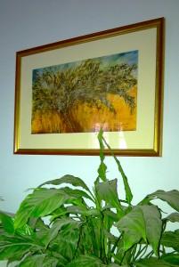 Olive Tree Prints For Sale-Private Home, Farnham, UK